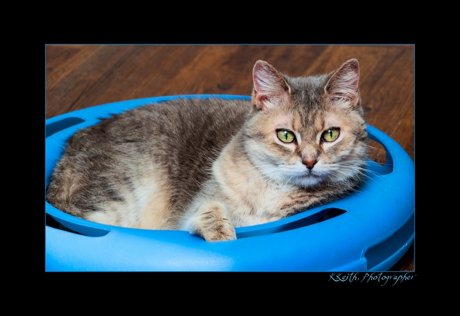 ANOTHER OF THE GREAT KITTIES FROM PURRFECT PARADISE: SEE THEIR WEBSITE AND WORDPRESS BLOG.