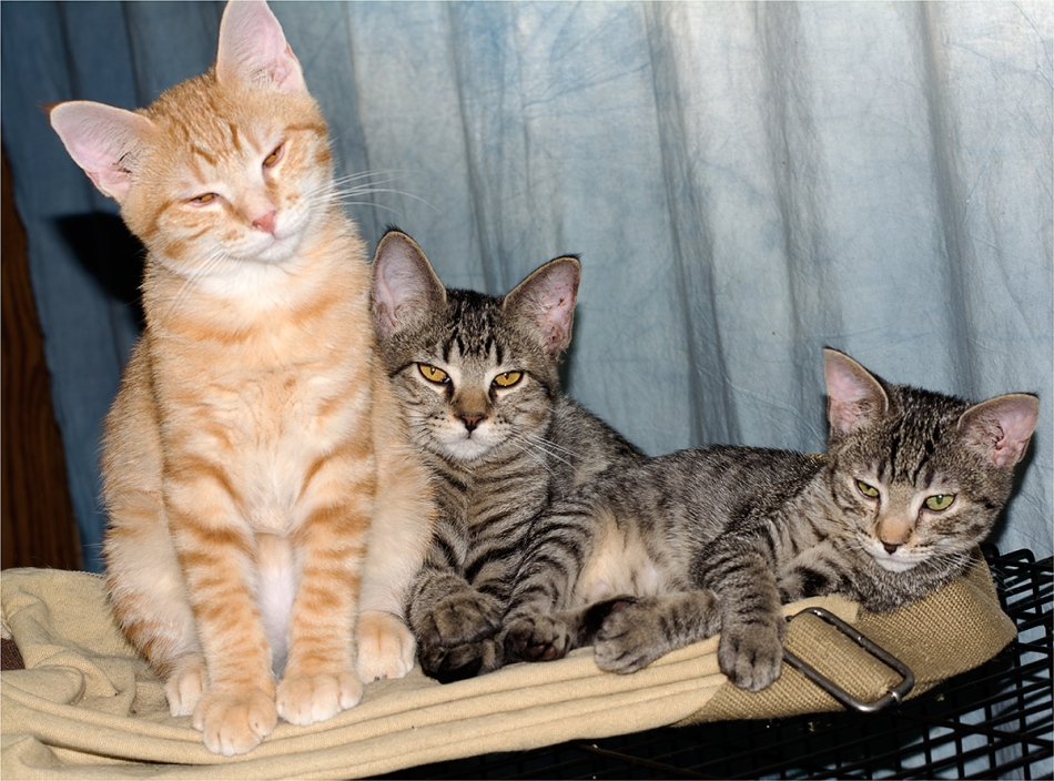 © KKEITH / ALL RIGHTS RESERVED L-R: Big Red, Greyg, Runt (Jr., not pictured)